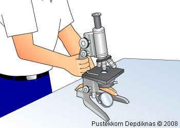 Laporan praktikum biologi mikroskop cahaya laporan praktikum
